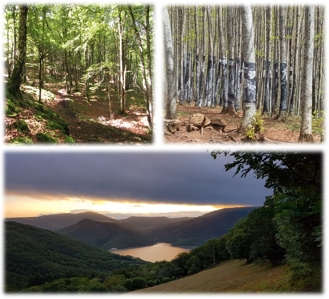 Senderismo bosques de Burdindogui